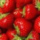 Erdbeeren-80